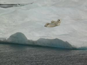 polar bear on back